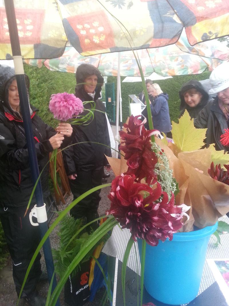 Blommor på Bergianskas höstfest