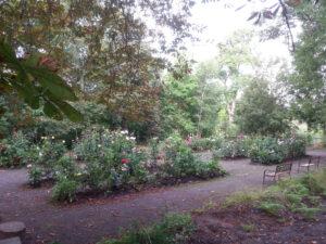 dahliaträdgården