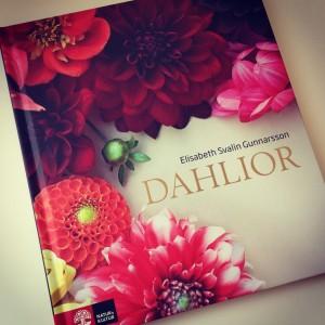 Dahlior (2)