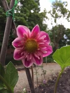 Första blomman i parken